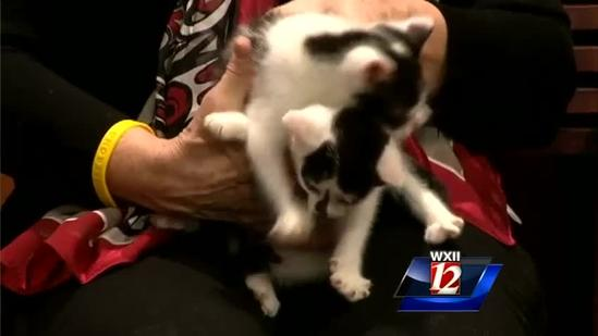 Pet Of The Week: Two Adorable Kittens