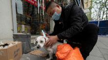 Shenzhen, première ville chinoise à bannir la consommation de chiens et de chats
