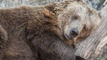 Bears Doze Ahead Of Fed, Boeing Up; This Dow Jones Stock Faces Critical Test