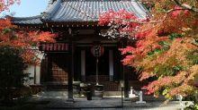 秋天不止楓葉季!日本控必知的4大人氣紅葉+櫻花景點