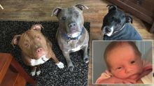 3-Week-Old Dies in Dog Attack After Being Left Alone With Family's Three Pit Bulls
