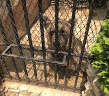 A year after the Beirut blast and things are so bad in Lebanon, even the bears are suffering