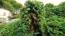 Tree of the week: 'It looks a bit of a hippy so I named it after Neil from The Young Ones'