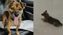 El perrito que esperó varios meses afuera de un hospital a su dueño sin saber que había muerto de COVID-19