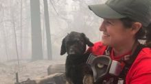 Puppy found alive after being buried under rubble and ash during California wildfires