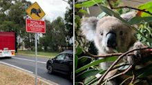 Plea to drivers to slow down over Christmas to help wildlife