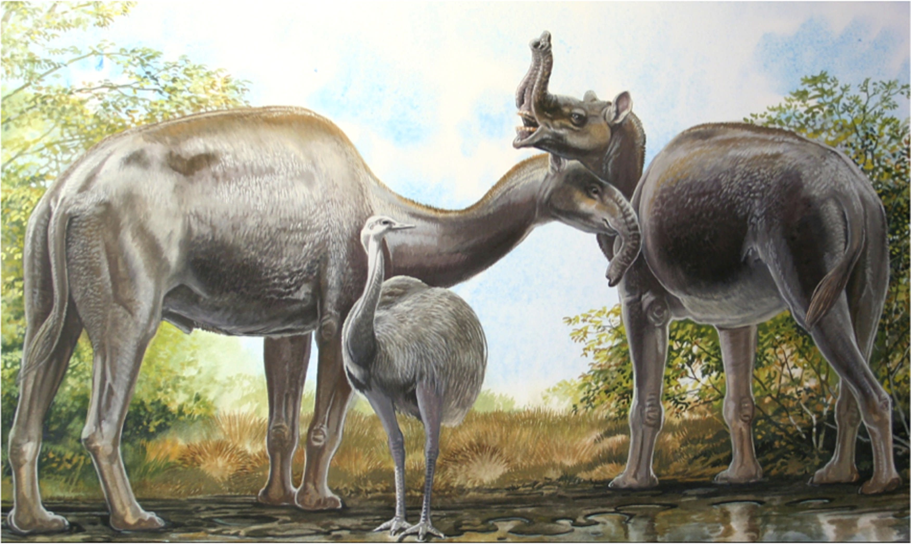 An artist's rendering shows the South American native ungulate Macrauchenia patachonica which had a number of remarkable adaptations, including the positioning of its nostrils high on its head in this illustration released on March 17, 2015. This implies that Macrauchenia may have had a mobile proboscis, as pictured here. REUTERS/Peter Schouten/Handout (UNITED STATES - Tags: ANIMALS ENVIRONMENT) FOR EDITORIAL USE ONLY. NOT FOR SALE FOR MARKETING OR ADVERTISING CAMPAIGNS. THIS IMAGE HAS BEEN SUPPLIED BY A THIRD PARTY. IT IS DISTRIBUTED, EXACTLY AS RECEIVED BY REUTERS, AS A SERVICE TO CLIENTS
