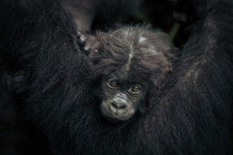 The United Nations biodiversity panel IPBES last year warned that up to one million species face the risk of extinction