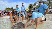 Earth Day: Rehabilitated sea turtle released in Florida Keys