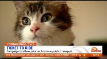Campaign growing to allow pets on public transport