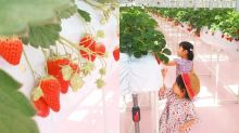 #POPSPOTS in Tokyo:一起到橫濱的「東京ストロベリーパーク」採草莓吧!