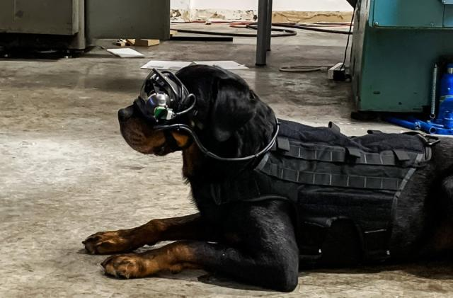The US Army is putting AR goggles on military dogs to better guide them