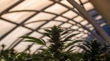 3 Top Marijuana Stocks to Watch in April