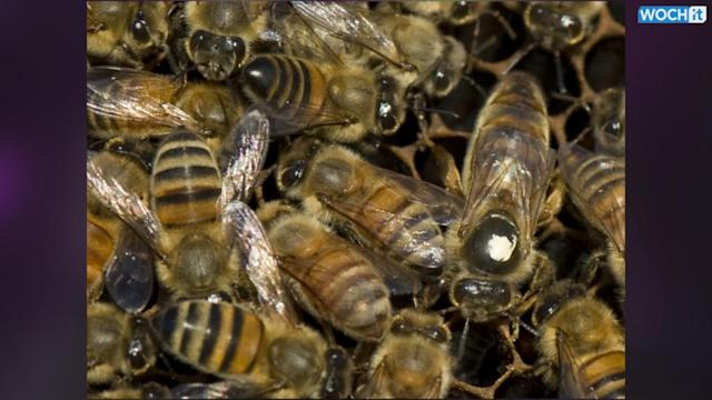 Bees Crucial To Many Crops Still Dying At Worrisome Rate: USDA