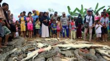 Villagers in Indonesia's Sorong district kill nearly 300 crocodiles in revenge after reptile kills one man