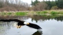This Bald Eagle Will Star In One Of Best Wildlife Photos You'll Ever See