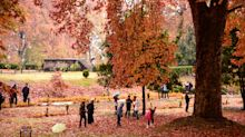Fall foliage 2019: Go leaf-peeping without spending a bundle