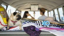 Como proteger seu pet dos perigos do calor