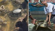 Selfies, sacrifice and 'special menus': Calls to close rogue turtle tourist parks