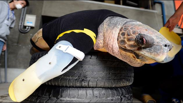 WTF- Watch A Turtle With Artificial Limbs