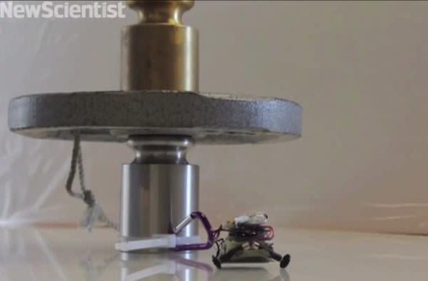 These tiny gecko-inspired robots can lift over 100x their weight