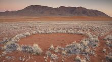 Finally, an explanation of strange African 'fairy circles'?