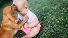 Cómo preparar a tu perro para la llegada de un bebé