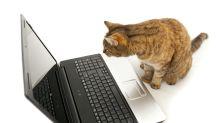 Vodafone schließt Vertrag mit Katze ab