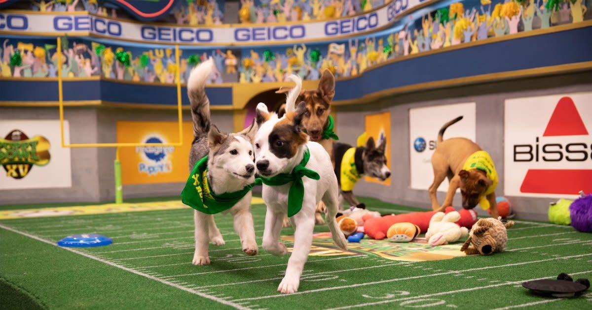 The Countdown to Puppy Bowl Has Begun! Get a Sneak Peek at