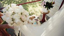 Wow-Wow! Braut kauft passendes Kleid für ihren Hund