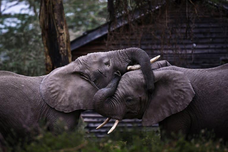 Zimbabwe probes deaths of 12 elephants near Hwange park