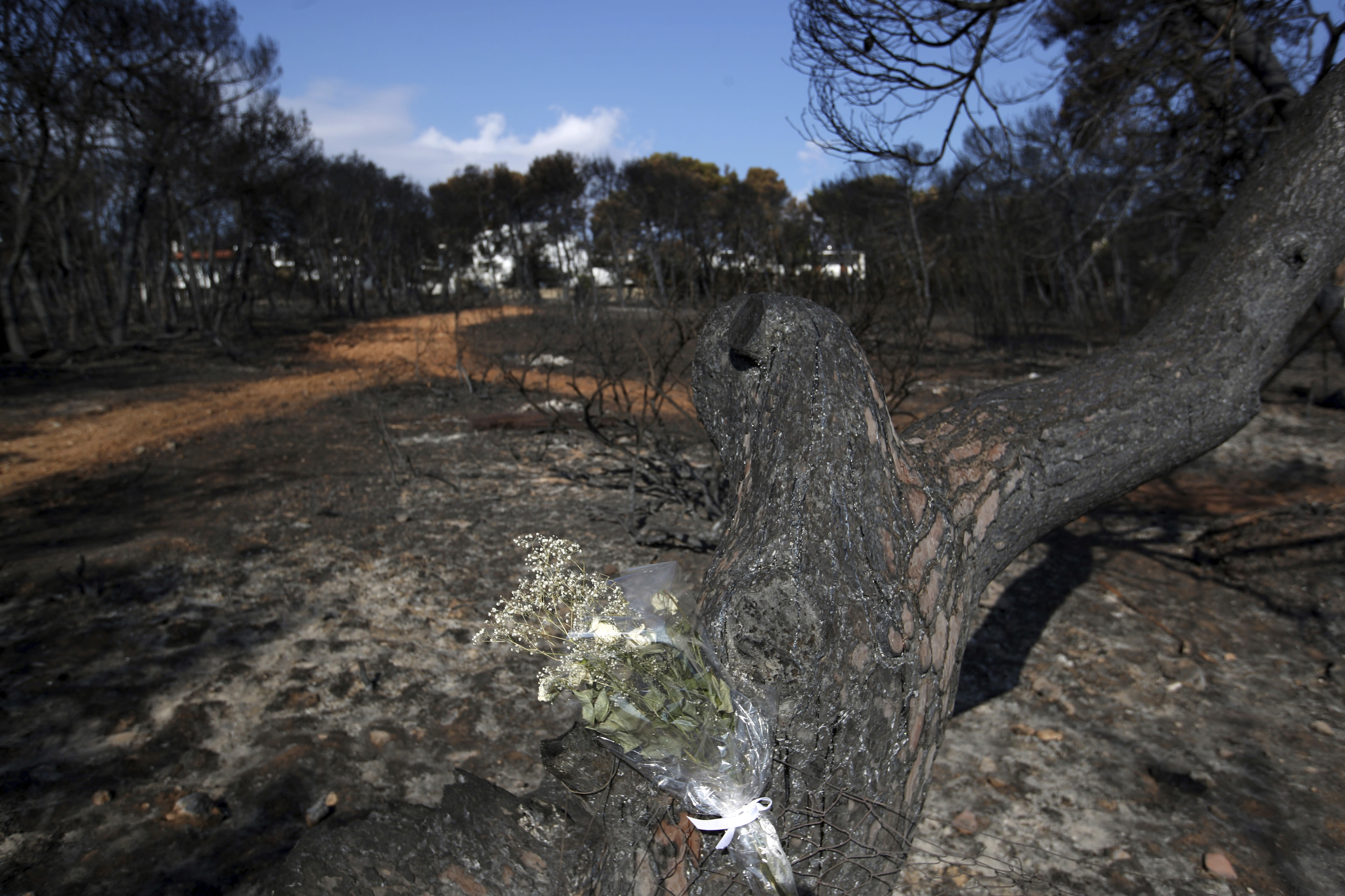 Flowers are placed on a burnt tree in Mati, east of Athens, Wednesday, Aug. 1, 2018, ten days after the wildfire. The bodies of 76 people killed by Greece's deadliest wildfire in decades have been identified, authorities said Tuesday, as forensic experts kept working to identify more remains recovered from the charred resort area. (AP Photo/Thanassis Stavrakis)
