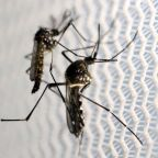 Tracking Zika: Virus hit earlier than thought in Brazil, Florida