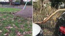 'I'm horrified': Giant tree branches fall on playground at local park