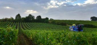 Ivresse des profondeurs dans les vignobles