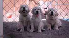 'Dogs' Trailer: Grab a Tissue for this New Netflix Doc Series All About Trusty Canine Companions