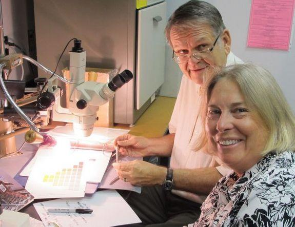 Wayne Wesolowski, a chemist at the University of Arizona, and Nancy Odegaard, conservator and head of the preservation division at the Arizona State Museum, examining paint flakes on a piece of window frame from Abraham Lincoln's funeral railca