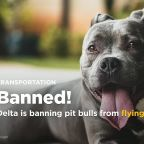 Delta is banning pit bulls from flying as service dogs