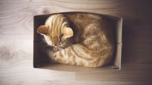 Cats really do love sitting in boxes (even illusory ones), according to science
