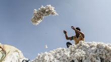 Bayer Gets Rare Monsanto Reprieve With Cotton Seed Ruling