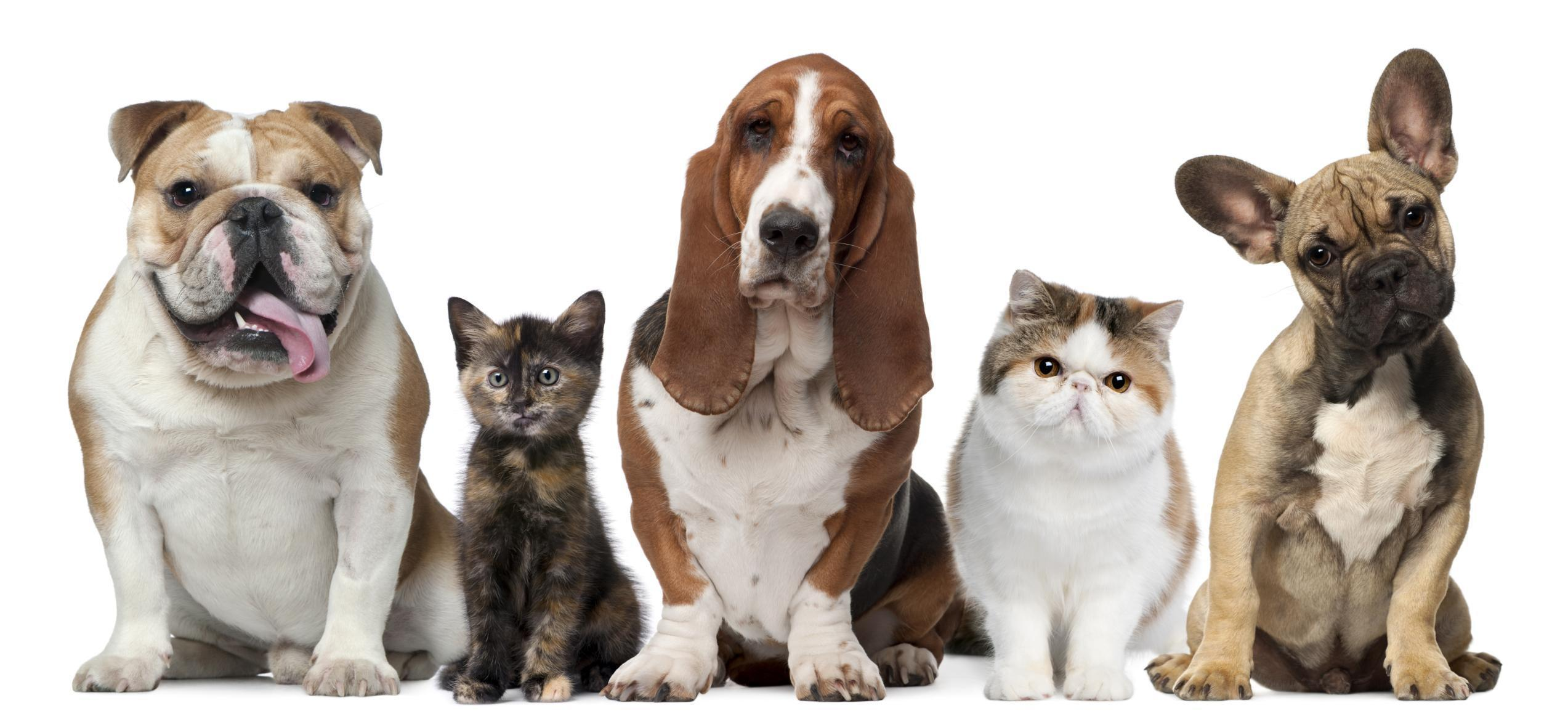 The Right Way To Calculate A Cat Or Dogs Human Age Don