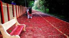 Red carpet! This station's beauty will blow your mind