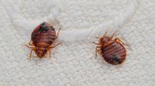 Chinches de cama: el insecto que ataca de noche