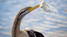 'Like velcro': Careless act leaves starving bird unable to eat for DAYS
