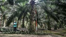 Malaysia threatens EU fighter jet boycott over palm oil