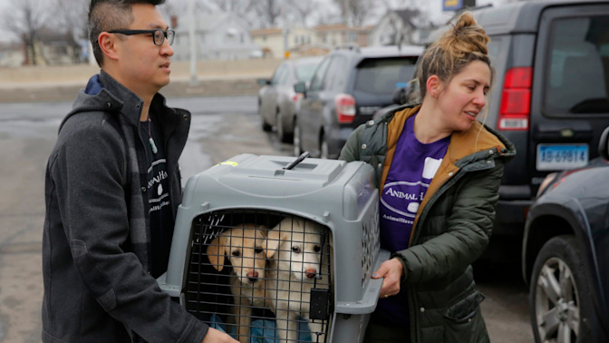 Dozens of dogs rescued from South Korea slaughter house arrive in New York to be rehomed