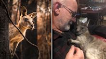 Outraged wildlife carers 'in tears' over new kangaroo kill plan