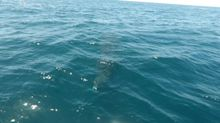 Beautiful whale shark swims around boat drifting in Mexico