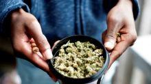 El rompecabezas de los empresarios de la marihuana: ¿Qué hacer con el dinero?