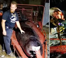 88 pounds of plastic found in stomach of dead whale